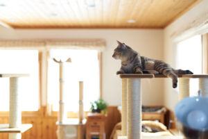 愛猫と幸せに暮らすリフォーム